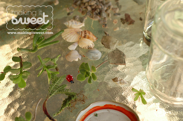 DIY Terrariums in a Jar Tutorial