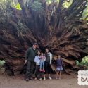 Road Trip: Glass Beach and Redwood State and National Parks