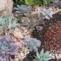 Succulent Garden Refresh
